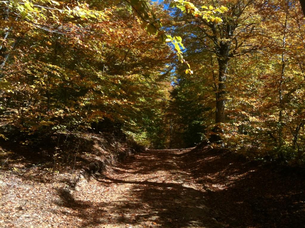 Όμορφος δασικός δρόμος στο Πήλιο | www.lightgear.gr