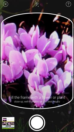 1. Αρχικά, φωτογραφήστε το λουλούδι που βλέπετε | www.lightgear.gr