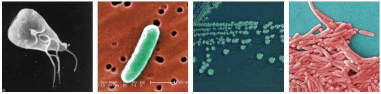 Κλασικοί μικροοργανισμοί, ιοί και βακτήρια όπως φαίνονται στο μικροσκόπιο | www.lightgear.gr