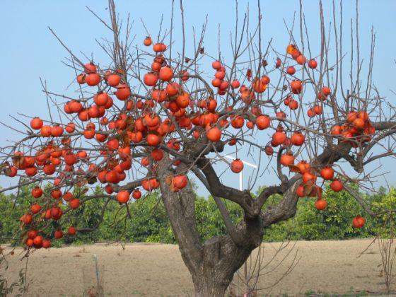 Όταν ο λωτός ρίξει τα φύλλα του μοιάζει να είναι στολισμένο με άπειρα πορτοκαλοκόκκινα λαμπάκια | www.lightgear.gr